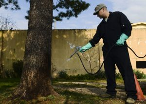 How Professionals In Essex Are Making Pest Control Easier?